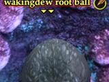 Wakingdew root ball