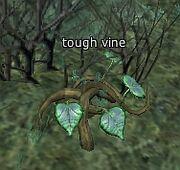 Tough vine