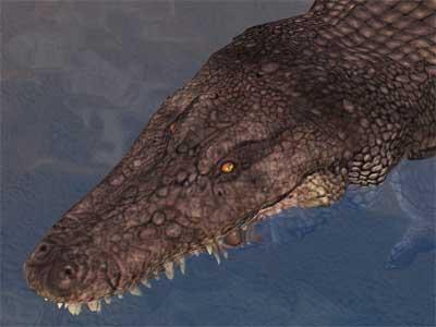 File:Race crocodile.jpg