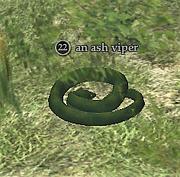 An ash viper