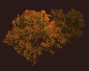 Autumnal Shrub (Visible)