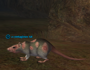 A contagious rat