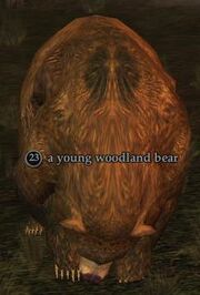 Young woodland bear