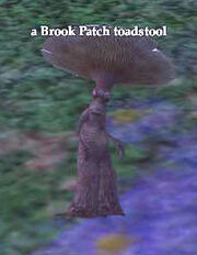 A Brook Patch toadstool