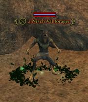 A Nisch Val forager