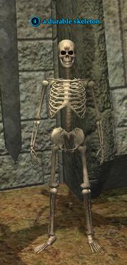 A durable skeleton