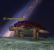 A large sand tortoise