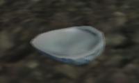 Shiny shell