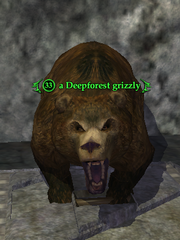 A Deepforest grizzly