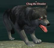 Chog the Drooler