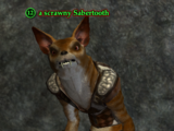 A scrawny Sabertooth