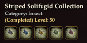 Striped Solifugid Collection