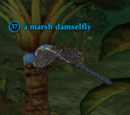 A marsh damselfly