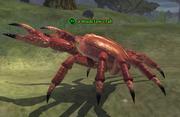 A mudclaw crab