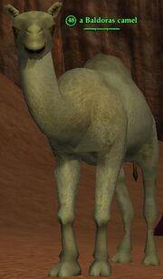 Baldoras camel