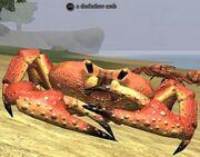 A darkclaw crab