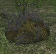 A sap urchin