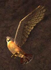 Race hawk
