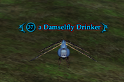 A Damselfly Drinker