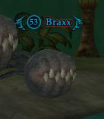 Braxx