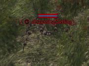 Obscured spiderling
