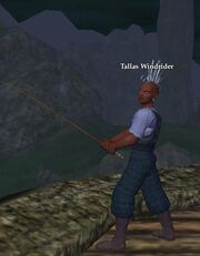 Tallas Windrider