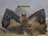 A carrion hawk