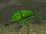 A massive emerald beetle