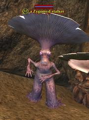 A Zygomyd stalker