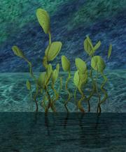 Everdark Reeds