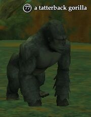 A tatterback gorilla
