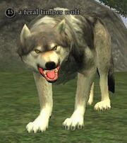A feral timber wolf