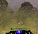 A blue widow spider (Commonlands)