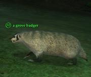 A grove badger