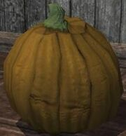 A pumpkin (Visible).jpg