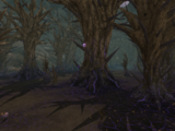 Waning Forest