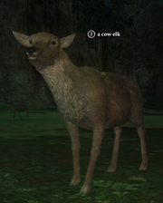 A cow elk