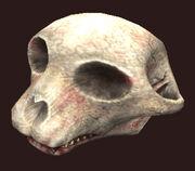 Dommed-hua-mein-skull