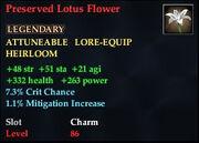 Preserved Lotus Flower