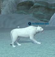 An icemane cub