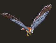 Hawk Plushie Placed