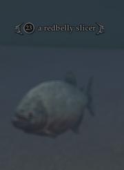 A redbelly slicer