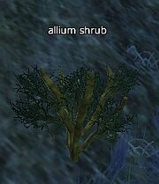Allium shrub