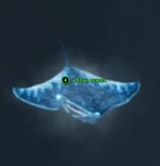 A blue manta