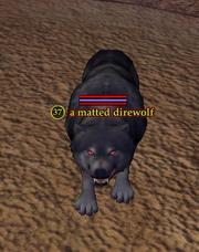 A matted direwolf