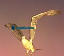 A seaside falcon