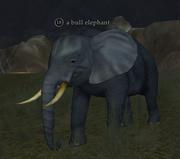 A bull elephant