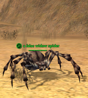 A false widow spider (Commonlands)