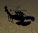 A molting scorpion