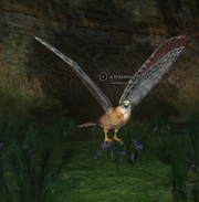 A training hawk